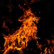 Fire goat - Stock Photo