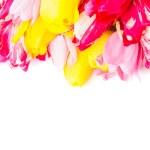 ������, ������: Spring tulips