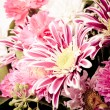 Pink aster background — Stock Photo #18642113