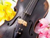 Black old violin — Stock Photo