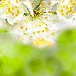 Spring bokeh — Stock Photo #21190947