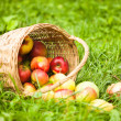 Apples and peaches on grass - Stock Photo