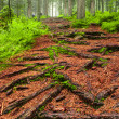 Path in forest — Stock Photo #22367373