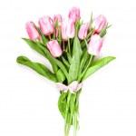 Pink tulips isolated — Stock Photo #24420483