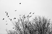 Ravens on the trees — Stock Photo
