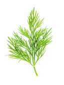Dill isolated — Stock Photo