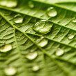 Stock Photo: Green leaf macro