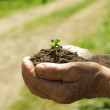 Hands with soil and plant — Stock Photo #25763219