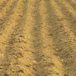 Furrows on the field  — Stock Photo