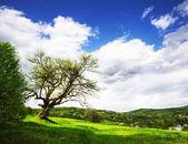 Un vieil arbre — Photo