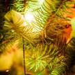 Outdoor chrismas tree — Foto Stock