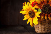Słoneczniki w koszyku — Zdjęcie stockowe