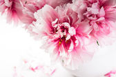 Pink peonies in vase — Stock Photo