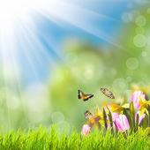 Herbe verte au-dessus du soleil — Photo