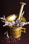 Dry lavender bunch — Stock Photo