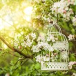 Bird cage - romantic decor — Stock Photo #45035277