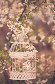 Bird cage - romantic decor — Stock Photo