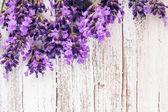 Fresh lavender — Stock Photo