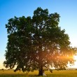 Wedding tree — Stock Photo #6055756