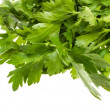 A bunch of parsley on a white background — Stock Photo