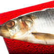 Stock Photo: Salted herring