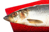 Salted herring — Stock Photo