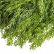 Dill herb — Stock Photo #22974554