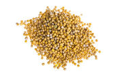 Yellow mustard seeds — Stock Photo