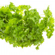 Ripe fresh Parsley — Stock Photo #23992041