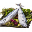 Fresh Atlanticmackerel - Stock Photo