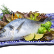 Fresh raw dorada — Stock Photo #25251537