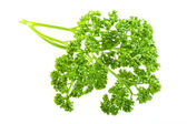 Parsley branch — Stock Photo