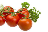 Red ripe tomatoes on the branch — Stock Photo