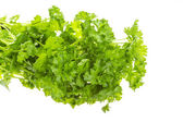 Ripe fresh Parsley — Stock Photo
