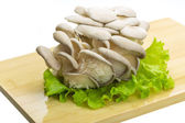Fresh Fungus — Stock Photo