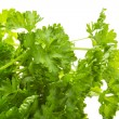 Stock Photo: Ripe fresh Parsley