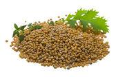 Mustard seeds — Stock Photo