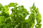 Ripe fresh Parsley — Stock fotografie