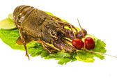 Raw spiny lobsters — Foto Stock