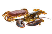 Raw Lobster and Crab — Foto Stock