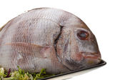 Raw porgy — Stock Photo