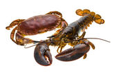 Raw Lobster and Crab — Stock Photo