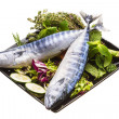 Fresh Atlantic mackerel — Stock Photo