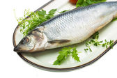 Marinated herring with herbs — Stockfoto