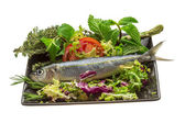 Fresh Herring — Stock Photo