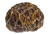 Custard-apple — Stock Photo