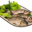 Raw Crucian — Stock Photo