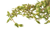 Fresh thyme branch — Foto de Stock