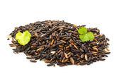Black glutinous rice — Stock Photo