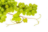 Green bright grape — Stock Photo